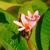 pembe · çiçekler · güzel · nadir · çiçek · doğa - stok fotoğraf © ivz