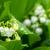 zambak · vadi · bahar · yaprak - stok fotoğraf © ivz
