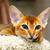 kedi · yavrusu · genç · kedi · ağaç · mobilya · turuncu - stok fotoğraf © ivz