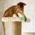 kedi · yavrusu · genç · kedi · ağaç · mobilya · doğa - stok fotoğraf © ivz