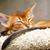 kedi · yavrusu · uyku · genç · kedi · turuncu · kırmızı - stok fotoğraf © ivz