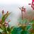 çiy · örümcek · ağı · damla · baharatlı · bahar · güzellik - stok fotoğraf © ivz
