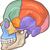 Human Skull Diagram Illustration stock photo © izakowski