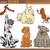 dog breeds cartoon set stock photo © izakowski