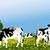 vaches · lait · illustration · vache · personnage - photo stock © jagoda