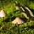 小 · 菌 · 成長 · 緑 · 苔 · 森林 - ストックフォト © jakatics