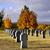 katonaság · temető · portré · kilátás · fehér · keresztek - stock fotó © jakatics