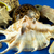 various pieces of shells stock photo © jakatics