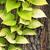 kirli · çam · ağacı · havlama · çatlaklar · arka · plan · doğal - stok fotoğraf © jakgree_inkliang