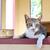Cute · прелестный · котенка · ванна · расслабляющая · смешные - Сток-фото © jakgree_inkliang