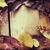automne · cadre · bois · bois · nature · horizons - photo stock © jamdesign