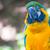 mavi · sarı · Namibya · Afrika · kuş · hayvan - stok fotoğraf © jamdesign