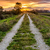 Dirt Road Path Leading to Sunset stock photo © jameswheeler