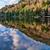 Alice Lake Forest Reflection stock photo © jameswheeler