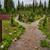 dois · caminho · mata · árvore - foto stock © jameswheeler