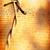 fil · fond · guerre · rouille · clôture - photo stock © janaka