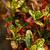 下がり · 黄色 · 木材 · 壁 · ファッション - ストックフォト © janaka