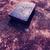 heilig · bijbel · boek · oude · jesus - stockfoto © janaka