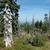 arbre · vieux · bois · fond · morts · blanche - photo stock © janhetman