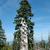 vieux · arbre · montagnes · Pologne · ciel - photo stock © janhetman