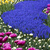 psychedelic · gekleurd · stralen · partij · abstract · ontwerp - stockfoto © janpietruszka