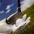 közelkép · golflabda · használt · sötét · fű · golf - stock fotó © janpietruszka