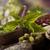 secas · ervas · diferente · pedra · planta · branco - foto stock © janpietruszka
