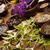 ハーブ · 自然 · カラフル · 自然 · 美 - ストックフォト © JanPietruszka