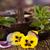 新鮮な · ハーブ · スキンケア · ラベンダー · アロエ · 葉 - ストックフォト © janpietruszka