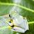 repülés · béka · dzsungel · zöld · trópusi · állat - stock fotó © janpietruszka