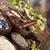 natural medicine wooden table background stock photo © janpietruszka