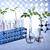 laboratório · artigos · de · vidro · equipamento · experimental · planta · médico - foto stock © JanPietruszka