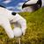 golflabda · golf · klub · naplemente · gyep · életstílus - stock fotó © JanPietruszka