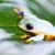 repülés · béka · illusztráció · vidám · zöld · repülés - stock fotó © janpietruszka