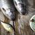 рыбалки · природного · продовольствие · природы · реке · лет - Сток-фото © janpietruszka