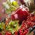 fresche · frutti · di · bosco · primo · piano · isolato · bianco · natura - foto d'archivio © janpietruszka
