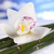 Orchid flower, Zen stones stock photo © JanPietruszka