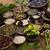 natural remedy mortar and herbs stock photo © janpietruszka