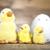 little easter duck stock photo © janpietruszka