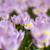 Голландии · весенний · цветок · парка · тюльпаны · закат · свет - Сток-фото © janpietruszka