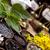 自然 · カラフル · 自然 · 美 · 薬 - ストックフォト © JanPietruszka