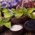 naturalismo · médico · ervas · natureza · beleza · medicina - foto stock © janpietruszka