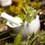 Assorted natural medical herbs and mortar stock photo © JanPietruszka