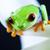 Exotic frog on colorful background stock photo © JanPietruszka