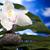 orkide · zen · taşlar · kum · plaj · çiçek - stok fotoğraf © janpietruszka