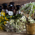 medicina · alternativa · secas · ervas · natureza · beleza · medicina - foto stock © JanPietruszka