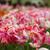 три · красочный · тюльпаны · прозрачный · весны · лист - Сток-фото © janpietruszka