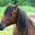 beautiful brown horse stock photo © jarenwicklund