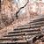 kő · lépcsőfeljáró · festői · tiszta · nyilvános · fém - stock fotó © jarin13