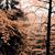 autumn in forest stock photo © jarin13